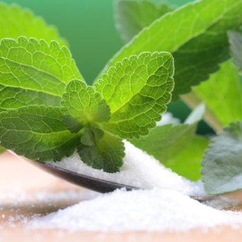 stevia rebaudiana – the sugar plant
